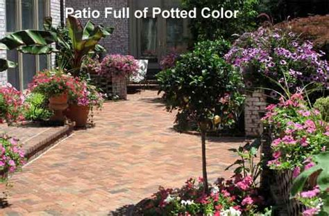 Best Plants For Patios by How To Bring Color To Your Patio From Terrace To