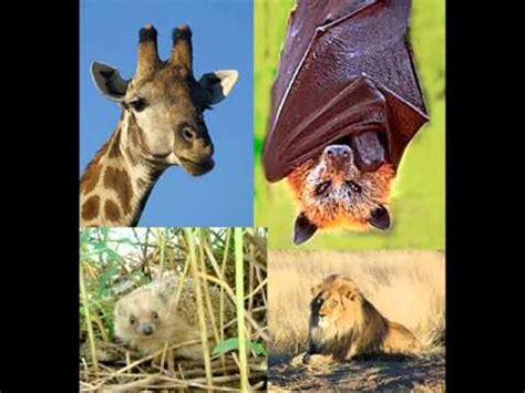 imagenes de animales viviparos animales ov 237 paros y viv 237 paros youtube