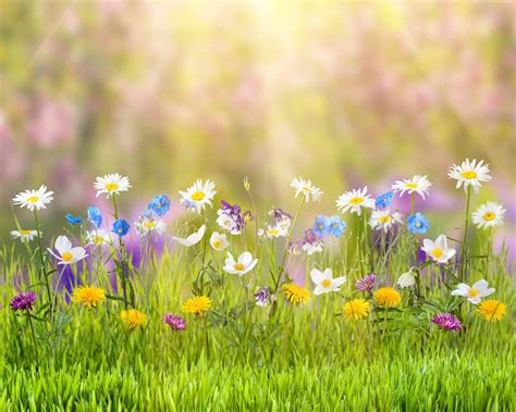 wallpaper 4k flower wallpaper flower 5k 4k wallpaper field spring nature