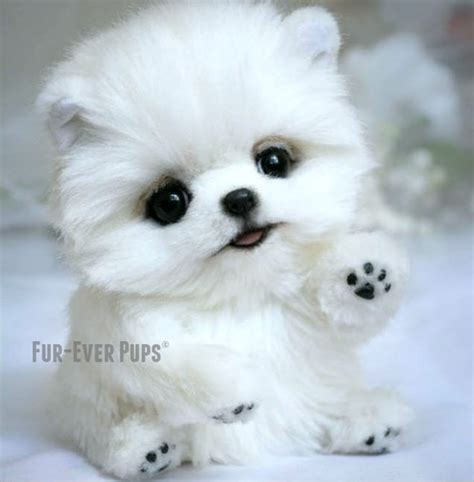 real teacup puppies fur pup 169 snowflake quot stuffed not a real boutique teacup puppies part 1
