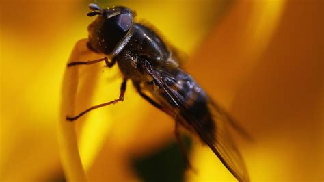how to keep flies patio get rid of drain flies images