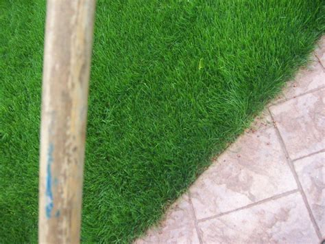 Commercial Grass Seed Mats by Hydroseeding Olympia Wa