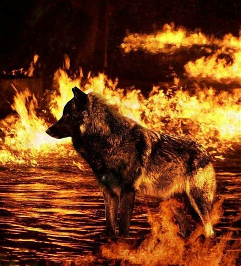 Wolf Fireplace pin by mariette fick on royal cousins amazing photos timber wolf and pictures