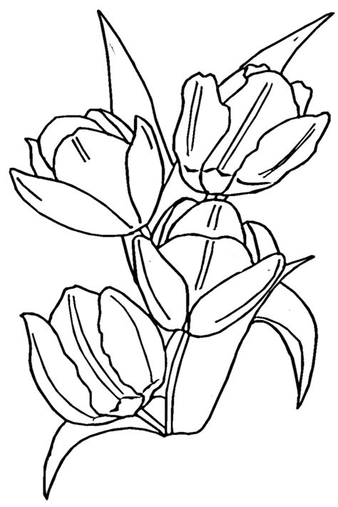 tulip leaf coloring page tulip coloring pages free printable coloring pages for kids