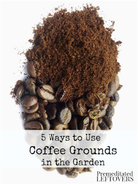 Coffee Grounds For Gardening by 5 Ways To Use Coffee Grounds In Your Garden