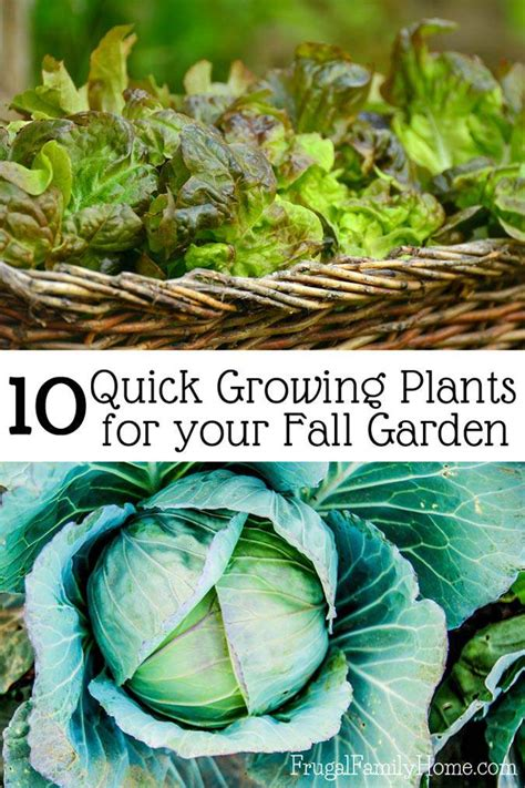 fall gardening great plants to grow in the fall frugal