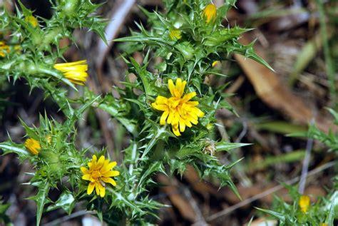 Blumen Und Pflanzen by Blumen Und Pflanzen 2 Istrien Kroatien Photos Und