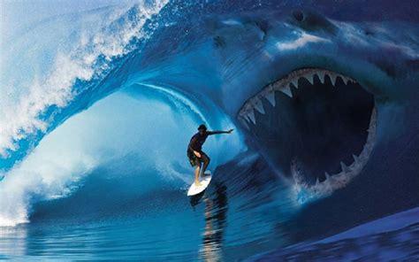 2015 beach shark attack surfer on surfer violence beach grit