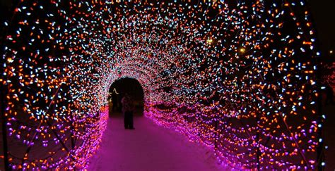 zoo lights calgary hours 5 simply magical things you can enjoy at zoolights this