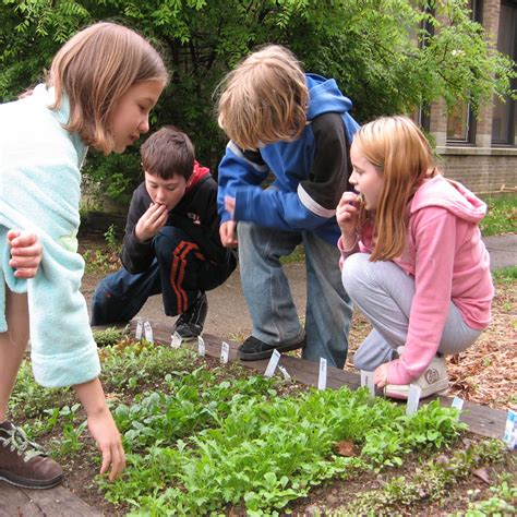An Introduction To School Vegetable Gardening School Vegetable Garden