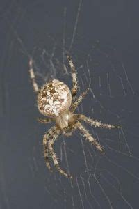 how to keep spiders out of your bed our virginia local on pinterest virginia spider and
