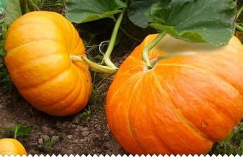 Plantation En Novembre Potager by Novembre Au Jardin Potager Quelles Actions Les Infos