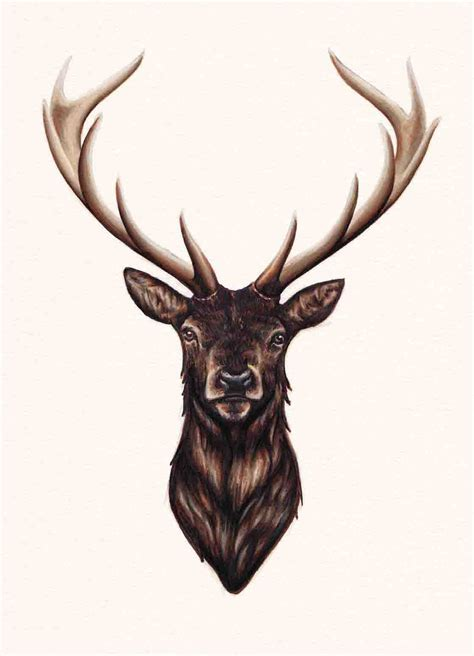 deer head tattoo designs stag antlers darkness and stag
