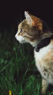 cat  green grass iphone wallpaper idrop news