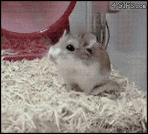 Cabin Fever Gif cabin fever gifs find on giphy