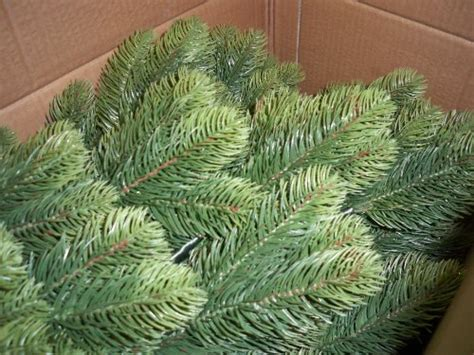 alberi di natale da interno miglior albero di natale 210 cm pino artificiale da