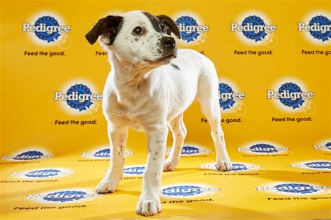 puppy bowl 2016 puppy bowl 2016 misssassy reel with