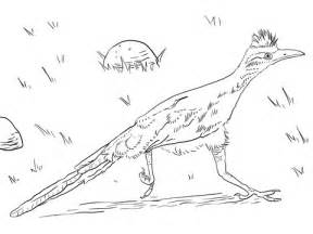 roadrunner bird coloring page road runner bird coloring pages