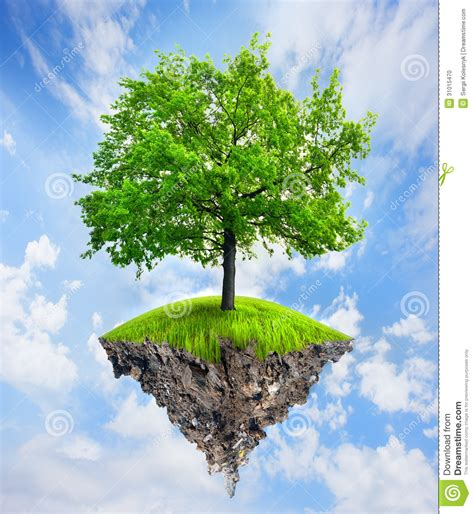 tree in tree in the sky stock photo image 31015470