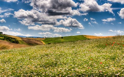 dream spring 2012 spring landscape hd wallpaper 2560 215 1600 dream spring 2012 field of flowers wallpapers hd