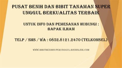 Bibit Kelengkeng Yang Baik 0852 8121 2470 tempat penjualan bibit durian bawor yang