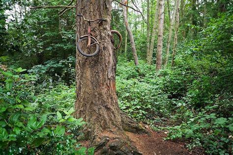 el curioso rbol prodigioso 8494504215 blog medioambiente org el 225 rbol que se comi 243 una bicicleta en 40 a 241 os
