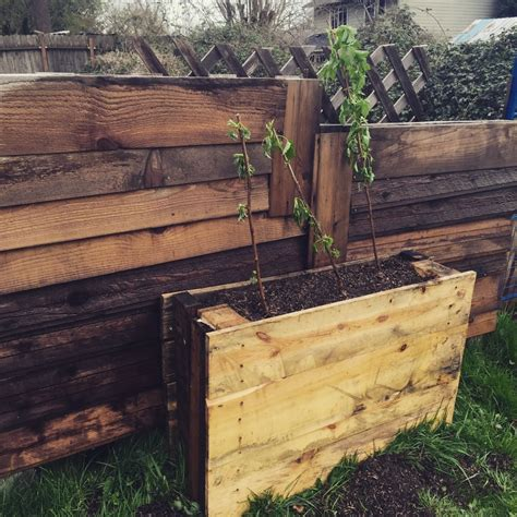 pallet garden bed hometalk upright pallet raised beds