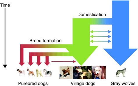 the domestication how wolves and humans coevolved books as a adam boyko laboratory