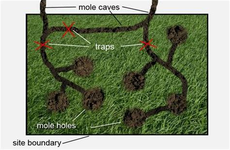 how to get rid of moles in my backyard how to get rid of moles in the yard
