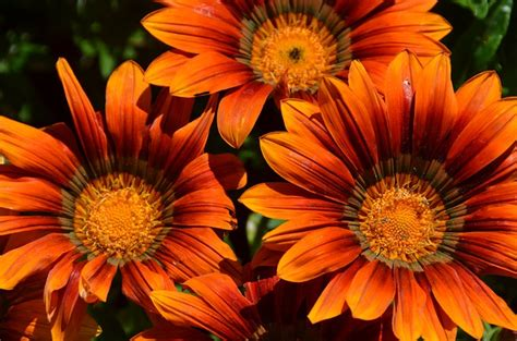 Orange Garden Flowers Free Pictures Plant 7357 Images Found