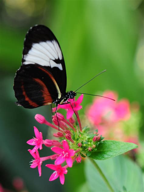 pretty butterfly  pink flower wallpaper iphone