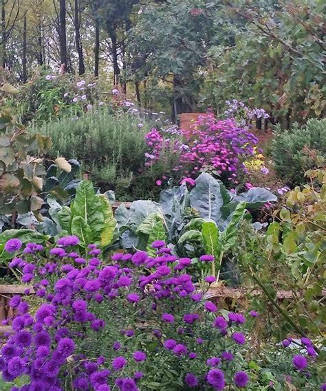 giardino d autunno aster o settembrini colore nel giardino d autunno