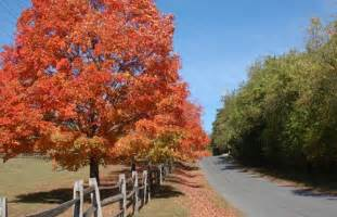 photographers in nj autumn foliage best places to see fall leaves in new jersey visitnj org