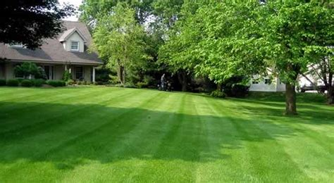 service wisconsin lawn care services lawn treatments lawn fertilizing lawn mowing wi