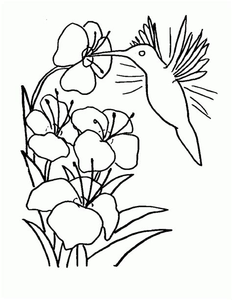 coloring pages with hummingbirds free printable hummingbird coloring pages for kids