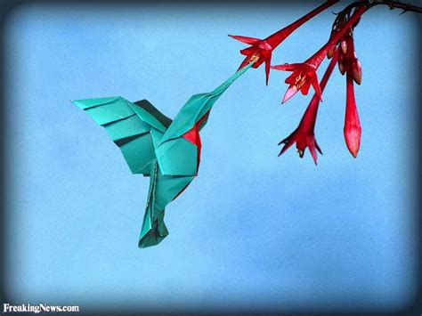 How To Make A Paper Hummingbird - origami hummingbird feeding on nectar pictures freaking news