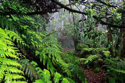 imagenes de paisajes gallegos wikinatu laurisilva