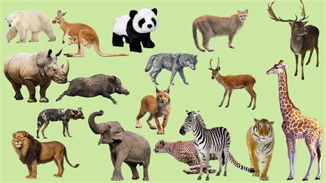 Boneka Singa Sitting gambar alam hewan musim panas margasatwa liar afrika