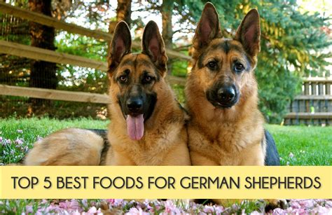 best puppy food for german shepherd top 5 best foods for german shepherds mysweetpuppy net
