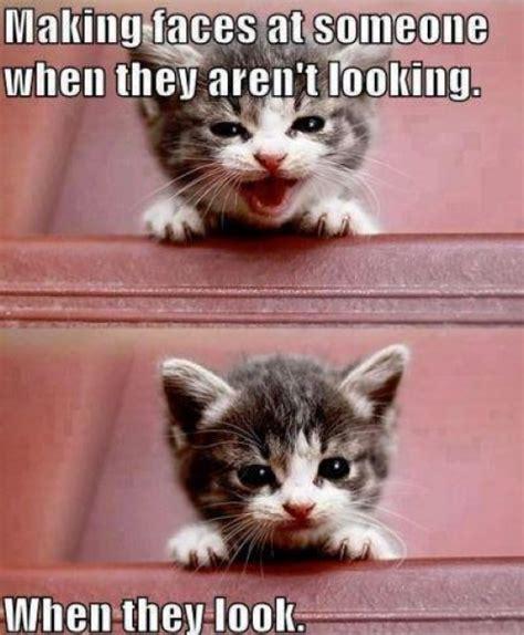 Cat Meme Faces - cat face cute kitten memes