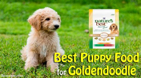 goldendoodle puppy diet best puppy food for goldendoodle top 5 reviews
