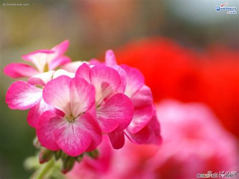 beautiful flowers wallpapers latest news 301 moved permanently