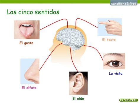 los sentidos2 ojo cinco sentidos related keywords suggestions ojo