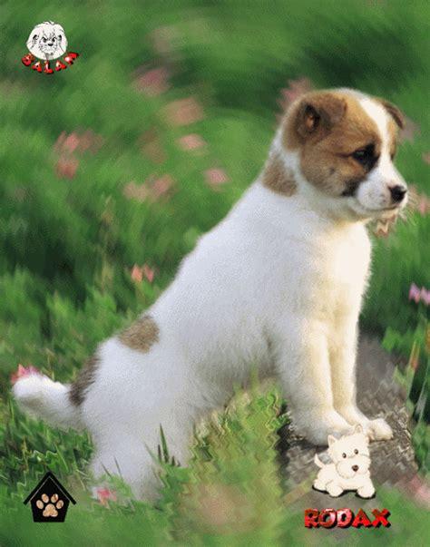 imagenes tiernas de perritos tiernas imagenes con movimiento de perritos imagenes de