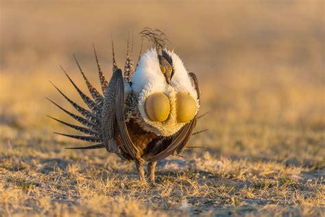 how to photograph bird mating rituals bird photography