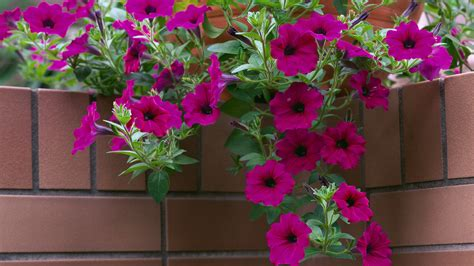 images of 6 flowers in pots large flower pots wallpaper
