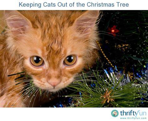 keeping cats out of the christmas tree thriftyfun