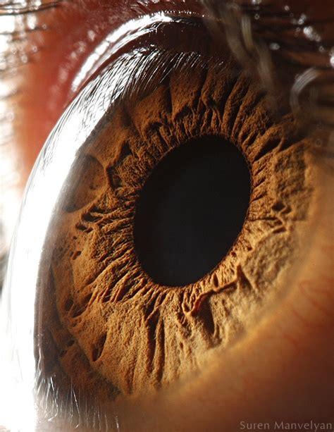imagenes de ojos zoom iridolog 237 a o como diagnosticar con el iris todo opticas