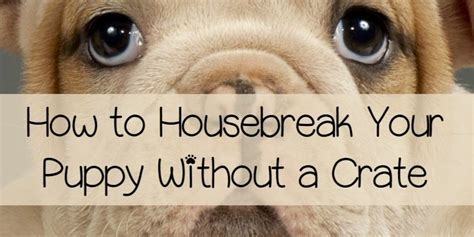 how to house a without a crate how to housebreak your puppy without a crate dogvills