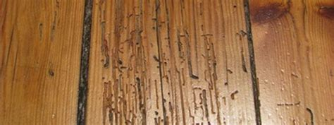hardwood floors and humidity woodmood